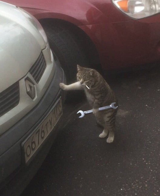 Cat Smoking